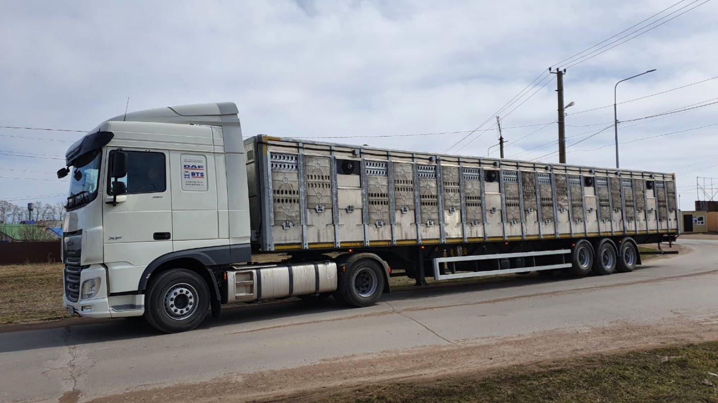 Перевозка животных и скота 8-965-920-08-80 - Тула, цены, предложения специалистов