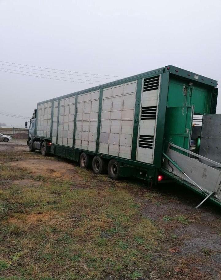 Перевозка скота - Киреевск, цены, предложения специалистов